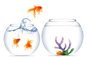 Fish leaping from one bowl to a better one